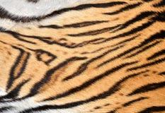 Pele do tigre fotos de stock royalty free