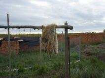 Pele dos carneiros Imagem de Stock