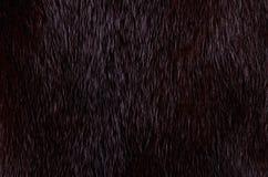 Pele escura do vison Imagens de Stock