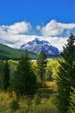 Pele-árvores verdes Fotografia de Stock Royalty Free