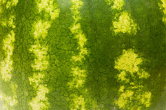 Pele verde da melancia Imagens de Stock