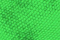 Pele verde do réptil Fotografia de Stock