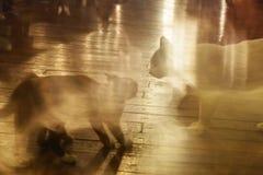 Pelea de gatos dos y confrontación mutua con velocidad y el movimiento Foto de archivo