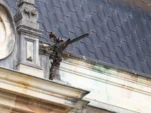 Peles城堡的屋顶的片段与装饰天沟的在锡纳亚,在罗马尼亚 免版税库存图片