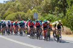 The Peleton on the final stage of Stage 3 of the Tour Down Under. On Thursday 18th January 2018 Royalty Free Stock Image