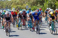 The Peleton on the final stage of Stage 3 of the Tour Down Under. On Thursday 18th January 2018 Stock Images