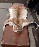 Pelez le lynx au marché de Vernisazh dans Izmailovo Image stock
