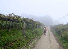 Pelgrim die voorbij wijngaarden lopen Stock Fotografie