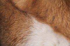 Peli del gatto Fotografie Stock Libere da Diritti
