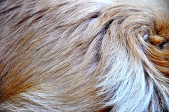 Peli di cane Fotografie Stock