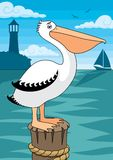 Pelican. A Pelican. No transparency and gradients used in the  file Royalty Free Stock Photos