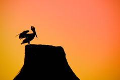 Pelican. Bird with a sky as a background Royalty Free Stock Image