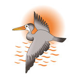 Pelican against the sun. Grey Pelican flying against orange sun over the waves Royalty Free Stock Photo