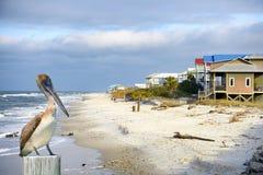 Pelican in Apalachicola, Florida, USA. Apalachicola sea landscape in Florida, United States Stock Photo