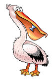 Pelican bird cartoon funny picture plumage Royalty Free Stock Image