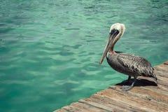 Pelican Bird Standing Dock Blue Ocean. Pelican standing on a wood dock overlooking the blue ocean Royalty Free Stock Image