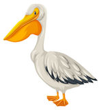 Pelican bird with white feather. Illustration Royalty Free Stock Photo