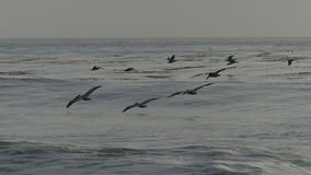 Pelican Birds Flying Over the Ocean in Slow Motion Royalty Free Stock Photos
