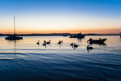 Pelican Birds Silouetted Lagoon  Stock Photos