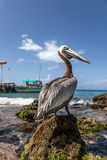 Pelican and boat Stock Photo