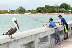 Pelican and boys fishing in Key West, Florida Keys Stock Photo