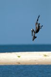Pelican diving into water. A brown pelican diving in after a fish in water Royalty Free Stock Photography