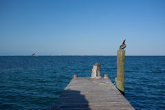 Pelican on dock Royalty Free Stock Photography