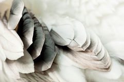 Pelican Feathers. An Abstract Closeup Row of Pelican Feathers Royalty Free Stock Photo