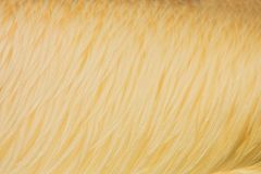 Pelican feathers Stock Image