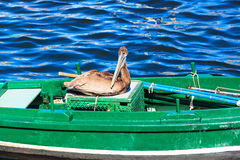 Pelican in fishing boat Royalty Free Stock Photography