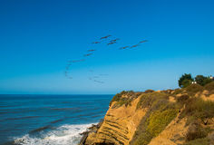 Pelican flock Over The Pacific Stock Photo