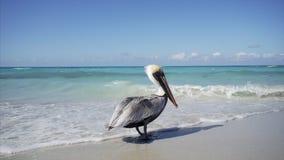 Pelican fly away