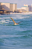 Pelican flying under the ocean Royalty Free Stock Images