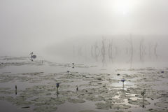 Pelican in a foggy sunrise at Lake Gregory in Australia. Stock Photos