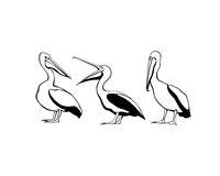 Pelican group illustration Royalty Free Stock Photography