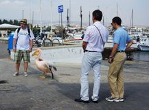 Pelican at the harbour of Paphos Royalty Free Stock Photos