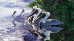 Pelican Heaven. A pristine group of white pelicans leave the shade of their tropical vegetation to embark into a stunning sunlit blue sea Stock Photos