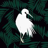 Pelican illustration. background. vector illustration