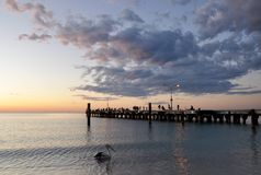 Pelican and Jetty Silhouette at Coogee Beach Sunset, Western Australia Royalty Free Stock Photo