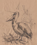 Pelican monochrome sketch Stock Photos