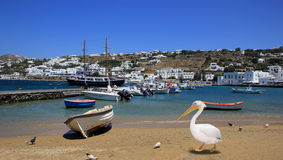 The Pelican of Mykonos and fishing boats on Mykonos island Stock Images