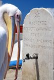 Pelican from Mykonos, Greece Royalty Free Stock Photos