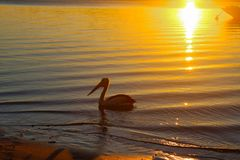 Pelican near shore as the sun flares over the water at dusk and turns the sand copper - with the bow of a boat moored offshore Stock Photo