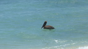 Pelican in Ocean. On a hot Summer`s day, this pelican gets tossed around by the ocean waves stock photography