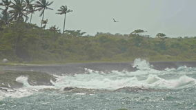 The pelican over extreme wave crushing coast, caribbean sea stock video footage