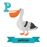 Pelican. P letter. Cute children animal alphabet in vector. Funn Royalty Free Stock Photography
