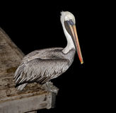 Pelican on the peer 1 Royalty Free Stock Photos