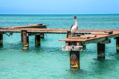 Pelican Peer Stock Photos
