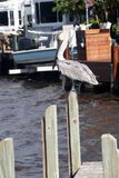 A pelican perched on a post Stock Images