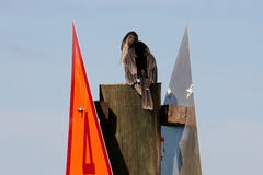 A pelican perched on a post Royalty Free Stock Photos